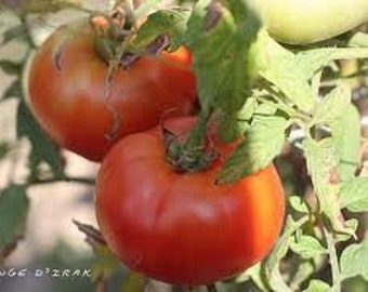 Rouge D' Irak Tomato (Endangered in own country)