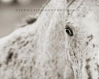 Black and White Horse Photography, Appaloosa Horse Print, Horse Detail, Horse's eye