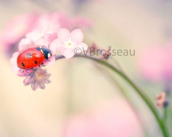 Lady bug on pink flower - macro flower and ladybug photography photography