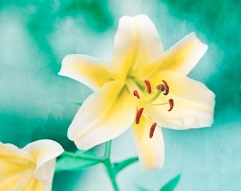 """Turquoise Yellow Photography, Teal Mint Flower Art Print, Yellow White Aqua Lily Picture, Turquoise Floral Teal Wall Decor, """"Yellow Lily"""""""