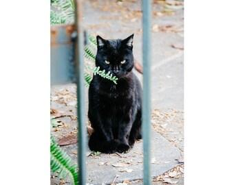 New Orleans Photography Cat Portrait NOLa Art Cat Photography Animal Photography Cat Wall Art  Black Cat Print