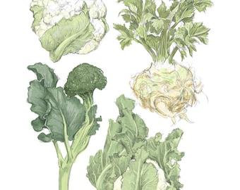 "ART505: Winter Vegetables Illustration Reproduction 8"" x 10""- Farmer's Market Wall Art"