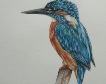 Original Colour Pencil Drawing by Alison Armstrong - Wildlife /Bird - Kingfisher