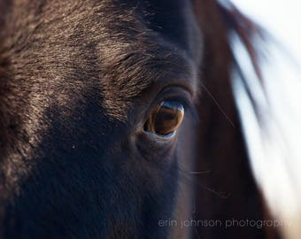 horse photography, close up of horses eyes, black horse photograph, large living room wall art, horse fine art print, rustic home decor