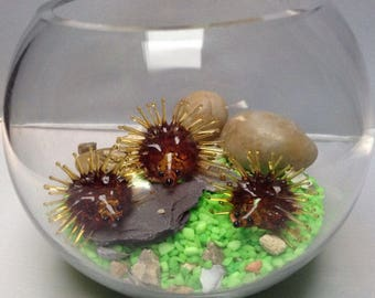 Family of hedgehogs in a glass bowl