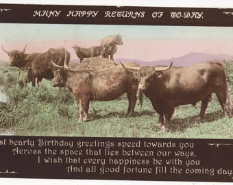 Longhorned CATTLE,Vintage Real Photo Postcard,Rotary A1524-5, Posted 1915 from HIGHBRIDGE Somerset To MELBORNE,Austrailia