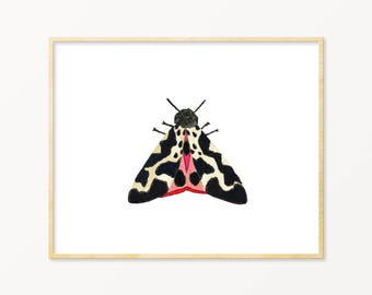 Black and Pink Watercolor Moth Art Print.  Colorful Insect Wall Art. Moth Painting.  Kids Room Nature Wall art. Black and White Nursery Art.