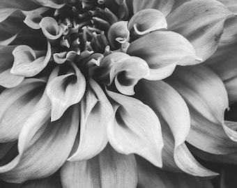 "Dahlia Flower Print - Black and White - Floral Wall Art - Gray wall art - Gift For Her - Nature Art - Botanical Print  ""Flowing Dahlia"""