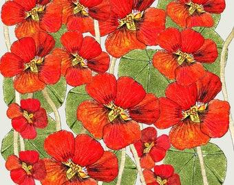 Potato printed 'Nasturtium Flowers' greeting card
