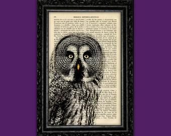 Owl Vintage Print Close Up Bird of Prey Poster Book Art Dorm Gift Print Wall Decor Poster Dictionary Print Animal Art Print (Animal Nº47)