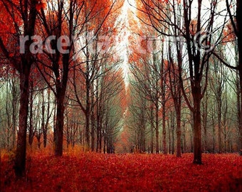 Nature Photography, Rustic Wall Art - Fall Forest in Orange Red Brown- Large Wall Art, Cabin Decor