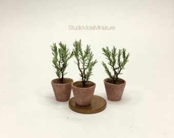 Miniature Clay Rosemary in pot (1/12 scale miniature)