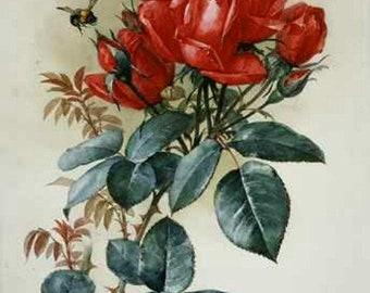Papa Gontier Roses - Cross stitch pattern pdf format