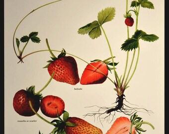 Strawberry Wall Art Fruit Wall Decor Kitchen Strawberries