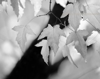 Black and white photography, nature photography, black and white nature, tree photography, trees, leaves, botanical, fine art photography