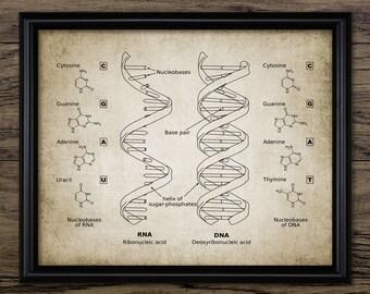 Vintage DNA & RNA Print - Genetic Code - Double Helix - Biology Science Illustration - Printable Art - Single Print #623 - Instant Download