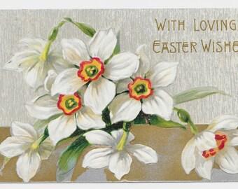 Bold Jonquils Easter Postcard, 1909