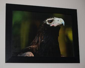 Wedge Tailed Eagle Print