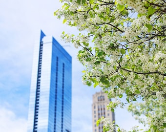 Chicago in Bloom, Flowers, Skyscraper, Spring Flowers, Chicago Photography, City Photography, Chicago Wall Art, Chicago Prints, Large Print