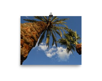 Palm Trees & Clouds Poster