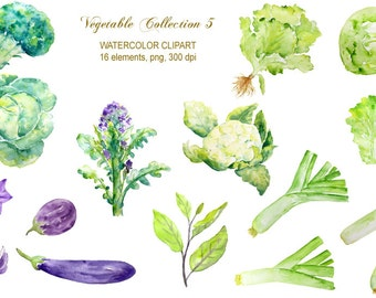 hand painted watercolor vegetables lettuce, leeks, aubergine, cabbage, broccoli digital clipart instant download for greeting cards