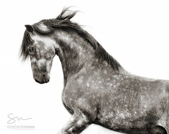 Black and White Horse Photography, Spanish Stallion Rearing, Fine Art Horse Photography, Horse Print, , Horse Picture, Horse Poster,