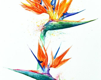 Bird of Paradise, Botanical Art, Watercolor painting, Floral Design, Watercolor print, Home decor, Wall art