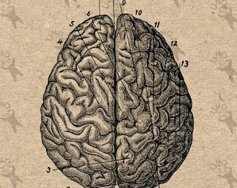 Vintage image  Anatomical Brain Retro drawing picture Instant Download printable clipart Black and White digital graphic HQ 300dpi