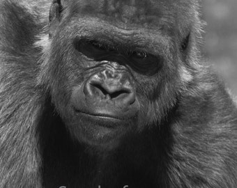 Black and White Gorilla