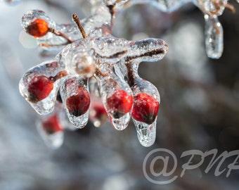 Winter Photography, Frozen Red Berries Photo, Fine Art Photography, Ice Storm Berries, Winter Storm, Landscape Photo, Office Decor, Home Art