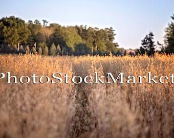 Wheat Field Sunset - Photoshop - New England - Golden Hour Field - Photography Backdrop - Sunset Field - Photo Manipulation background
