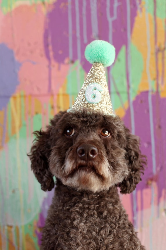 Dog Party Hat | Dog Birthday | Pet Birthday Party Hat | Dog Lover Gift