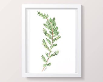 Watercolor herb print, Kitchen Art, Botanical print, Original Watercolor artwork, Kitchen print, Original watercolor, Thyme painting, green