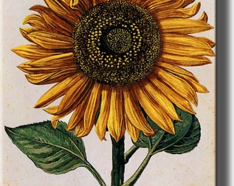 A Picture of Sunflower Made on Stretched Canvas, Wall Art Decor Ready to Hang.