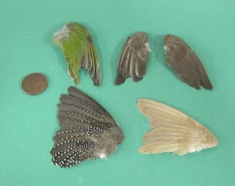 5 Single Finch Dried Birds Wings Feathers Art Craft Taxidermy Various Colours Spots etc  Shipping Included