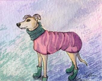 Chien whippet Greyhound tirage 8 x 10 - manteau et chaussons