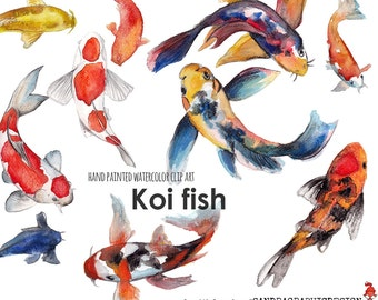 Koi fish clip art, hand painted watercolor clip art  (5242)