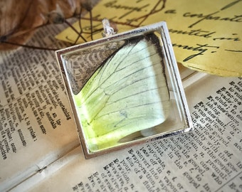 Yellow Butterfly Necklace, Eurema, Terrarium, Real Butterfly's Wing, Glass Frame necklace, Resin, Woodland Mori, Eurema Hecabe Pieredae