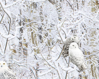 Snowscapes Snow Owl C6133 from Timeless Treasures by the yard