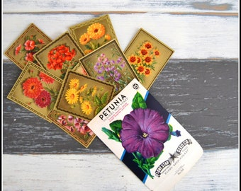 Vintage Flower Cigarette Cards Inside of a Vintage Petunia Seed Packet - Flower Ephemera - Vintage Flowers
