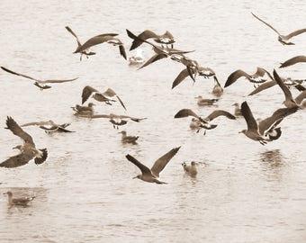 SoCo-0007: Seagulls in Bodega Bay