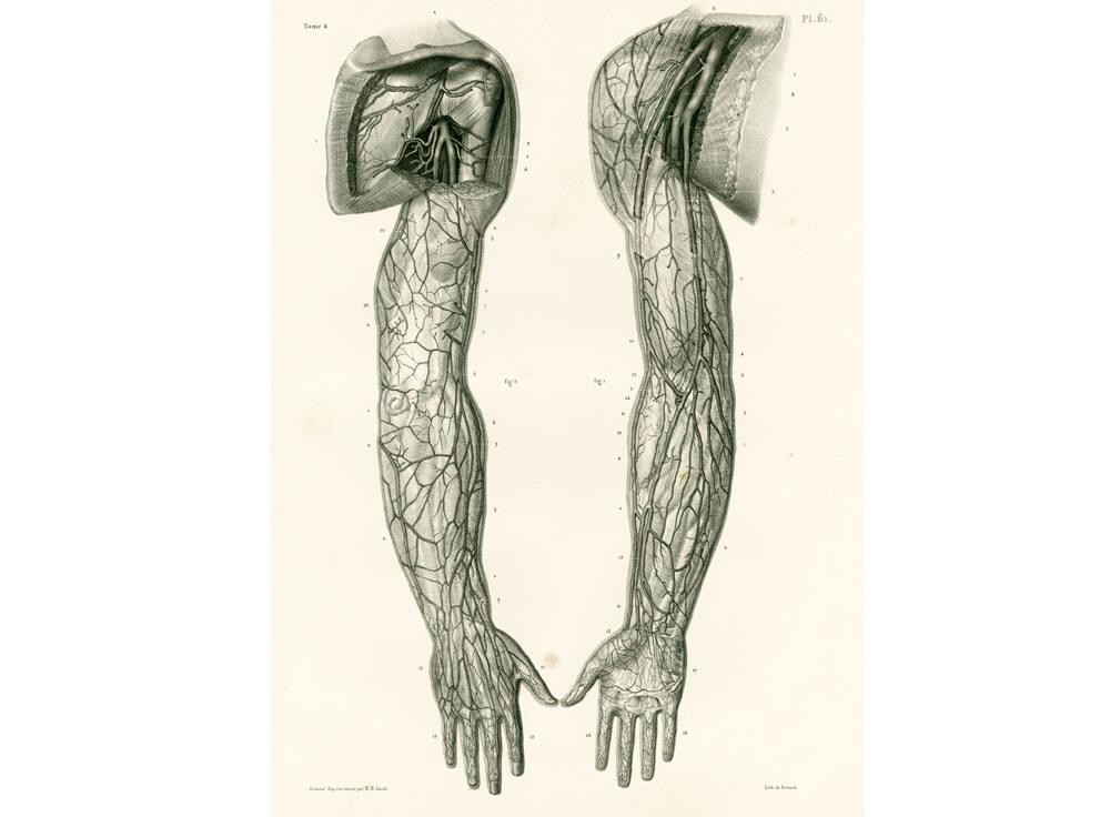 1836 Arterien Körper Muskeln von Arm und Hand anatomische