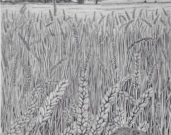 Harvest Mouse - Original Graphite Drawing