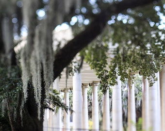 New Orleans Art, City Park Peristyle, Neoclassic Architecture, Louisiana Photograph, NOLA Wall Art, New Orleans Home Decor