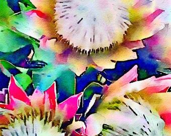 Watercolor Print - Floral - Proteas