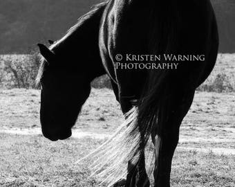 The Stand, Horse Photos, Black and White, Equine Photography, Horses, Silhouette, Equine Art