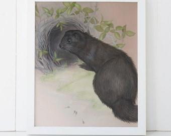 Mink Fine Art Print 8x10 Giclee Wall Decor