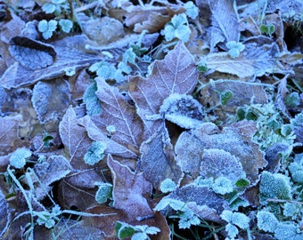 Frosty Leaves Note Card