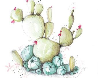 Cactus • Illustration