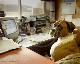 Boxer, Boxer Art, Fawn Boxer, Flash Boxer, Brindle Boxer Dog Art